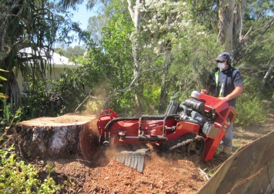 Bear Stump Grinding Services - stumping a large gum tree