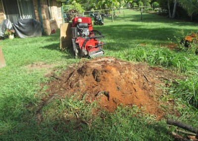 Bear Stump Grinding - Toro X Stump